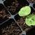 eau · feuille · semis · croissant · semences - photo stock © sarahdoow