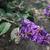 arı · çiçekler · bahar · çiçekli · meyve · ağacı · bahçe - stok fotoğraf © sarahdoow