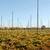 Autumn view of an empty hop garden after harvest stock photo © sarahdoow