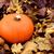 maturo · arancione · zucca · asciugare · caduta - foto d'archivio © sarahdoow