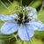 sevmek · buğu · çiçek · makro · kafa - stok fotoğraf © sarahdoow