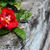 Red rose on weathered wood stock photo © sarahdoow