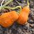 deux · orange · jaune · insolite · rayé - photo stock © sarahdoow