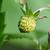 eper · gyümölcs · makró · kicsi · fehér · természet - stock fotó © sarahdoow