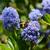 polen · makro · mavi · çiçek - stok fotoğraf © sarahdoow