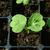 苗 · 水滴 · 緑色の葉 · 小さな · 植物 · 成長 - ストックフォト © sarahdoow