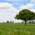 quercia · campo · lussureggiante · verde · farm - foto d'archivio © sarahdoow