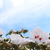 arı · uçan · çiçekler · egzotik · güzel · çiçek - stok fotoğraf © sarahdoow