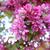 rosa · flor · rama · cangrejo · manzana · manzano - foto stock © sarahdoow