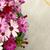 アフリカ · デイジーチェーン · 花 · 自然 · 庭園 · パターン - ストックフォト © sarahdoow
