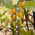 jaune · prune · tomates · vigne · légumes · jardin - photo stock © sarahdoow