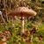 napernyő · gomba · föld · szint · mutat · textúra - stock fotó © sarahdoow