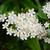 çiçekler · beyaz · makro · çiçek · bitki - stok fotoğraf © sarahdoow