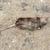 morto · mouse · pequeno · ferimento · de · volta · concreto - foto stock © sarahdoow