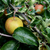 finom · zöld · alma · levelek · sötét · zöld · levelek - stock fotó © sarahdoow
