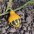 jaune · vert · croissant · longtemps · vigne - photo stock © sarahdoow