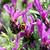 méh · keres · nektár · levendula · virágok · pillangó - stock fotó © sarahdoow
