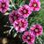 розовый · выстрел · цветок · зеленый · завода - Сток-фото © sarahdoow