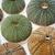 sea urchins stock photo © sarkao