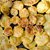 ジャガイモ · 食事 · マクロ - ストックフォト © sarkao