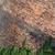 緑 · ツタ · 壁 · カバー · 美しい · 春 - ストックフォト © sarkao