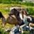 ponies stock photo © sbonk