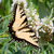 oriental · tigre · belo · borboleta · flor · preto - foto stock © sbonk