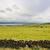 牛 · 半島 · アイルランド · 自然 · ファーム - ストックフォト © sbonk