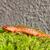 красный · зеленый · мох · природы - Сток-фото © sbonk
