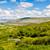 hermosa · irlandés · esmeralda · verde · campos - foto stock © sbonk
