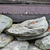 rotsen · strand · zee · ontwerp - stockfoto © sbonk