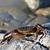deniz · kabuk · yengeç · plaj · sabah · ada - stok fotoğraf © sbonk