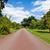 út · vezető · gyönyörű · nyár · kert · napsütés - stock fotó © scheriton
