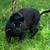 luipaard · portret · mannelijke · South · Africa · natuur · kat - stockfoto © scheriton