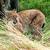 рысь · глаза · лес · природы · кошки · снега - Сток-фото © scheriton