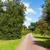 út · gyönyörű · nyár · kert · napsütés · égbolt - stock fotó © scheriton