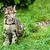 leopar · oturma · çim · doğa · rezerv · Güney · Afrika - stok fotoğraf © scheriton