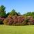 colorful rhododendron bushes in lush sunny garden blue sky stock photo © scheriton