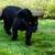 jaguar · kamera · çim · gözler - stok fotoğraf © scheriton