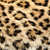 Real Live North Chinese Leopard Skin Texture Background stock photo © scheriton