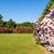 english · giardino · impianti · fiori · acqua · rosa - foto d'archivio © scheriton