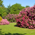 rhododendron and azalea bushes in beautiful summer garden stock photo © scheriton