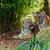beyaz · kaplan · hayvanat · bahçesi · doğa · hayvan - stok fotoğraf © scheriton