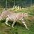 gepárd · fű · macska · minta · állat · gyönyörű - stock fotó © scheriton