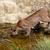 puma · halászat · tavacska · gyönyörű · környezet · erős - stock fotó © scheriton