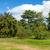 gyönyörű · buja · zöld · kert · napsütés · égbolt - stock fotó © scheriton