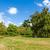 buja · zöld · nyugalmas · kert · napsütés · égbolt - stock fotó © scheriton