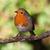 Robin in winter stock photo © scooperdigital