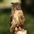 coruja · pássaro · cabeça · retrato · olhos · pena - foto stock © scooperdigital