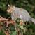 eski · ağaç · sonbahar · park · doku · orman - stok fotoğraf © scooperdigital